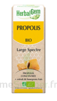 Herbalgem Propolis Large Spectre Solution Buvable Bio Fl Cpte-gttes/15ml à TOULOUSE